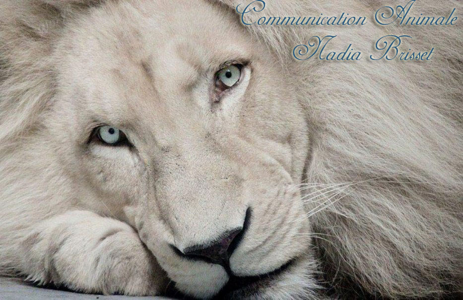 Communication Animale Nadia Brisset